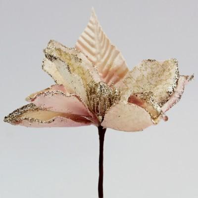 květ poinsettia